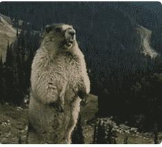一头熊大喊啊的表情动态图励志带搞笑字图片